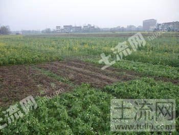 四川彭山县400亩成片平原良田整体转让