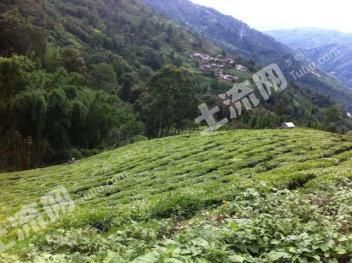 云南地区出售20万亩山林地