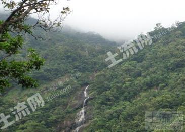 海南省五指山市 千亩林地转让(允许旅游开发)