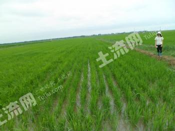 1万3千亩(荒地)对外转让或合作水稻开发