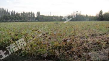 新疆五家渠劳教所86亩耕地(带700颗成熟苹果树,300棵成熟李子树)转包