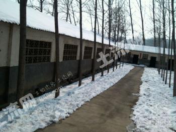 洛阳嵩县老党养猪场对外出租或转让