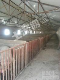 陕西吴起大型养猪场转让出售