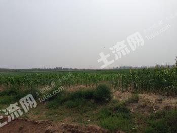 河北永清县50亩农地转让