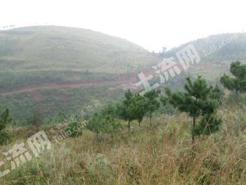 嵩明林地300多亩转让(编号:KM0217)