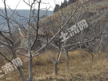 山东省济南市长清区300亩林地、耕地转包