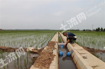 濮阳市范县王楼镇400亩优质水田流转