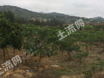 广东揭阳惠来县惠城镇130亩农用地转让