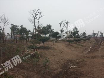 江苏印象生态农业发展有限公司,户外拓展园合作招商