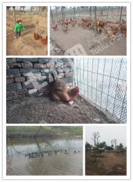 江苏印象生态农庄,快乐农场(真实版QQ农场)寻求合作