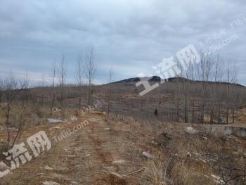 山东沂源县2000亩土地出租或转让