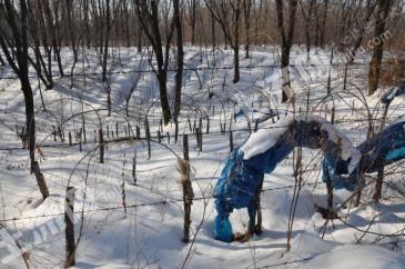 吉林通化长白山930亩林下野山参基地出售