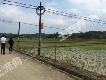 株洲县砖桥乡800亩水稻田出租(ST003)