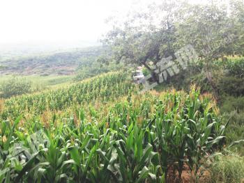 陕西铜川300亩优质耕地、林地低价转让
