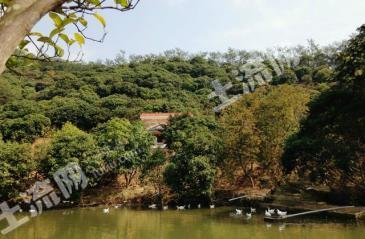 (出租)广州市增城70亩庄园