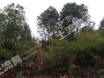 湖南郴州400亩优质山地转包