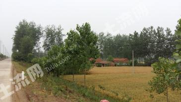 江苏沭阳县章集乡19亩农业用地转包