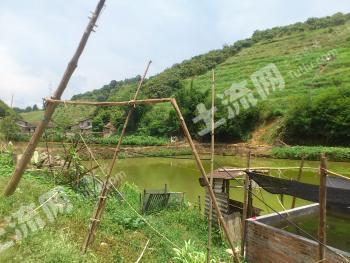 (转让)肇庆市160亩封闭式私人生态农场
