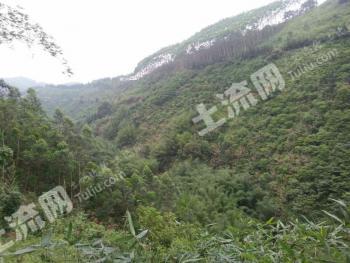 肇庆市广宁130亩生态农场(转让)