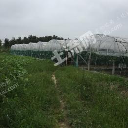 转包31亩果园