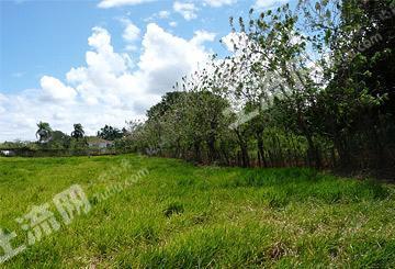 广州白云区金沙洲900亩地皮出售