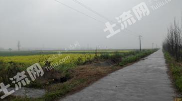 澧县800亩成片水田出租