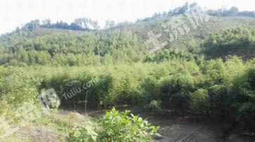 杭州临安村集体林山地出售1.2万/亩(永久性)
