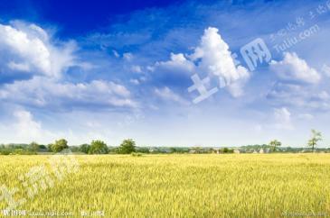 吉林松原6120亩熟稻田转让