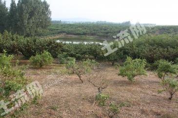 安徽明光市43亩优质土地转让