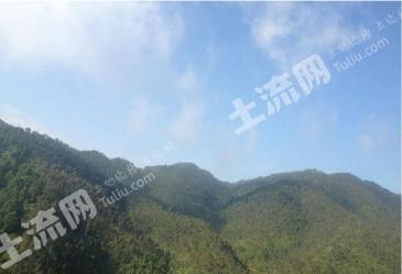 广南县3000亩桉树林转包