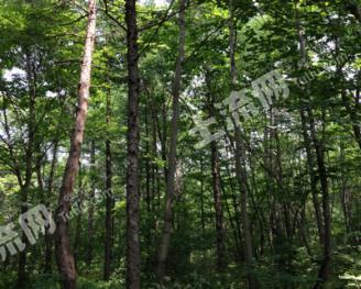 转让7000亩有林地