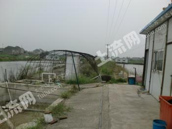 靖江河蟹池45亩转让,转租都可以