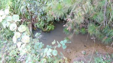 (HY002)转让衡阳200亩有山有水有房