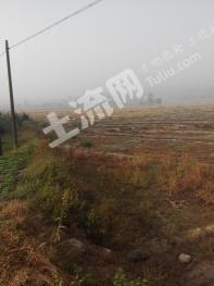 租赁四川岳池天平镇200亩耕地