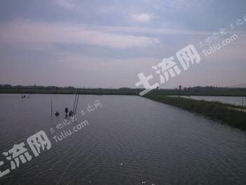 转让茂名电白区麻岗镇160亩虾塘鱼塘 MM205