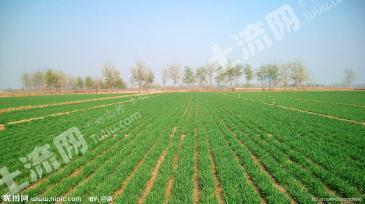 出租濮阳县王称堌乡普通耕地越200亩