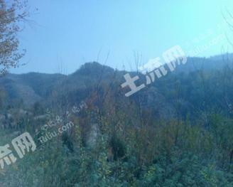 转让西宁城东区5300亩灌木林地