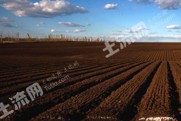 吉林松原6120亩黑土地(熟地)转让
