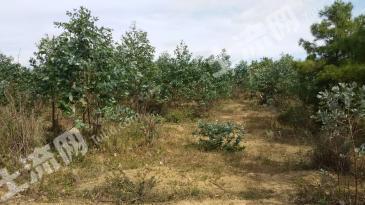马龙县340亩林地转让