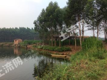 转让广东肇庆150亩农场