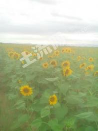 转包1900亩农场