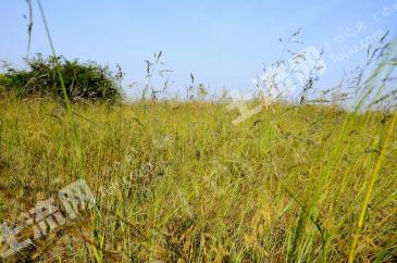 吉林白城地区约9000亩国有未利地低价转让