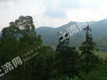 云浮市新兴县450亩私人生态山水农场