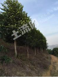 云浮市郁南县300亩大型生态农场
