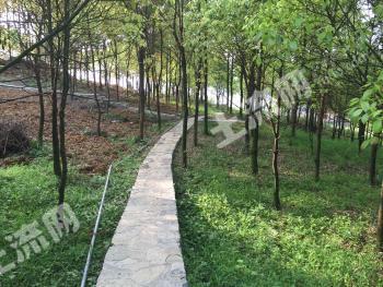 重庆北碚区养牛场转让