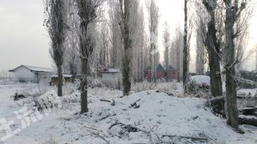 新疆伊犁河附近10亩旅游用地转让0836