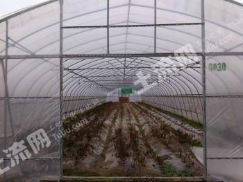 樟树周边标准化蔬菜大棚基地出租