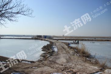 宁夏银川贺兰县200亩农场出租 租金:18万元