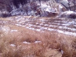 转让32亩荒地