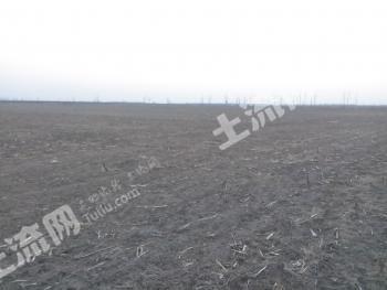天津市静海县5000亩耕地出租